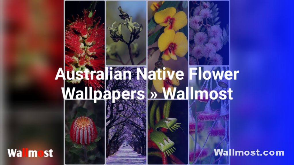 Australian Native Flowers Wallpapers, Pictures, Images & Photos