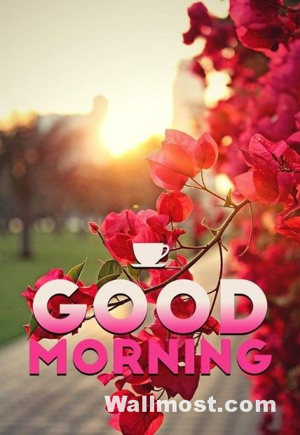 Good Morning Wallpapers Pictures Images Photos 18