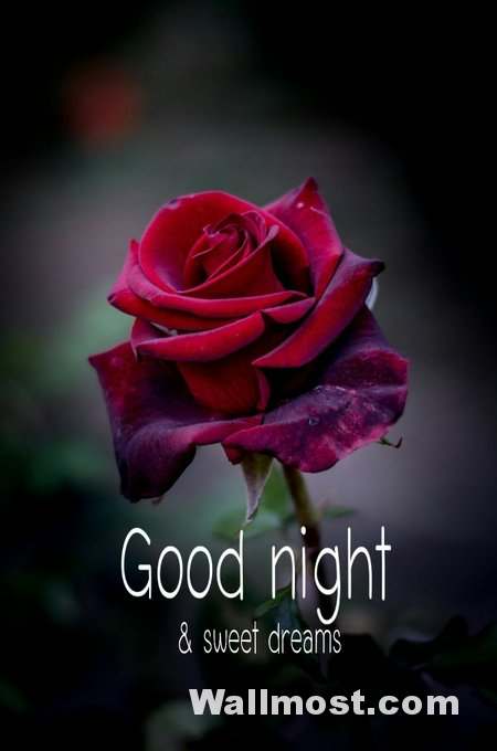 Good Night Wallpapers Pictures Images Photos 3