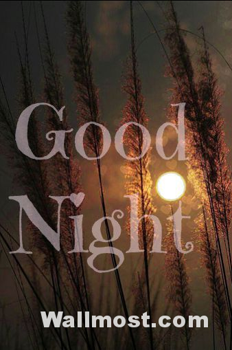 Good Night Wallpapers Pictures Images Photos 6