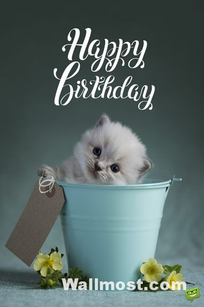 Happy Birthday Wallpapers Pictures Images Photos 7
