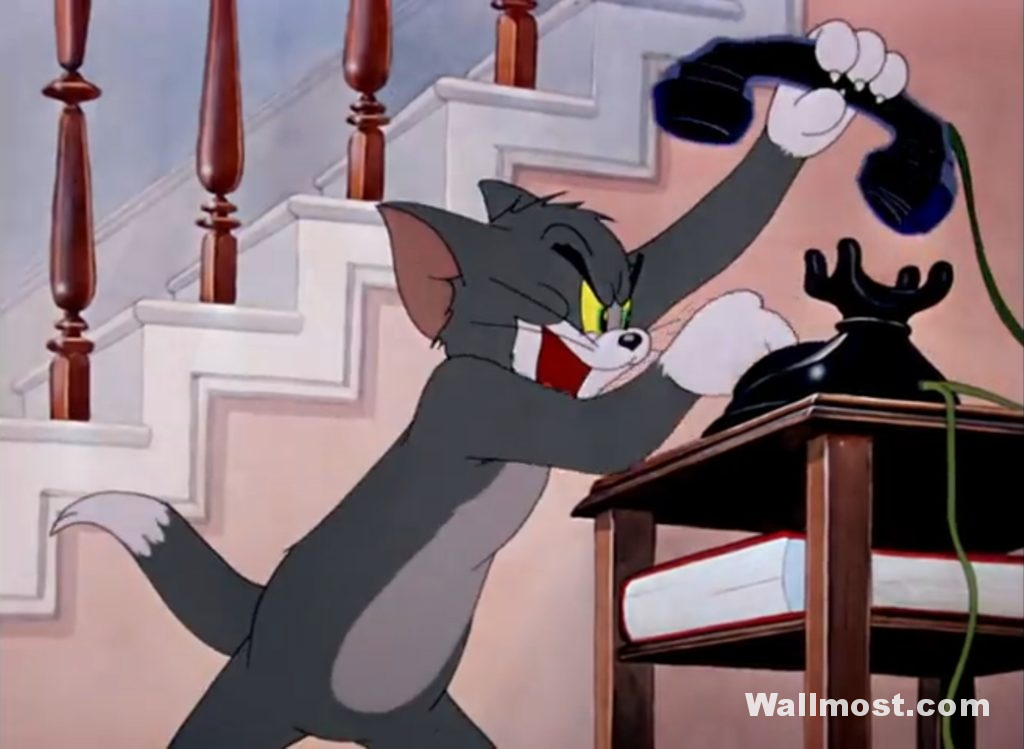 Tom And Jerry Memes Wallpapers Pictures Images Photos 14