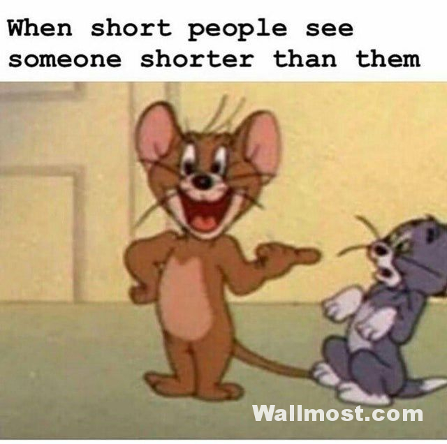 Tom And Jerry Memes Wallpapers Pictures Images Photos 8